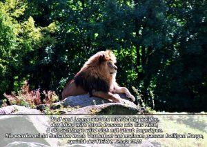 Löwe- Bibelzitat Jesaja_65,25 - go 4 jesus - Danzer, Christine