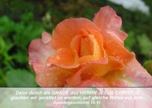 Rose- Bibelzitat Apg 15,1 - go 4 jesus - Danzer, christine
