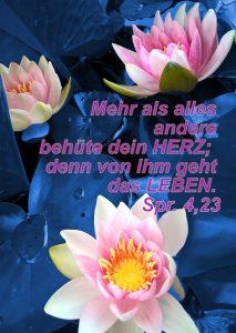 Seerose in blau - Sprüche 4, 32 - Christine Danzer - go 4 jesus -bibel