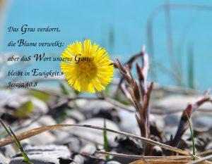 Hufflatich-Wort_Gottes- Christine Danzer - go 4 jesus