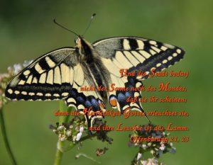 Schwalbenschwanz - Schmetterling- Offenbarung 21, 23 -herrlichkeit _gottes- Christine Danzer - go 4 jesus