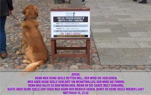 Hund vor der Schlosskirche - Wittenberg - go 4 Jesus - Jesus lehrte - Bibel - Christine Danzer
