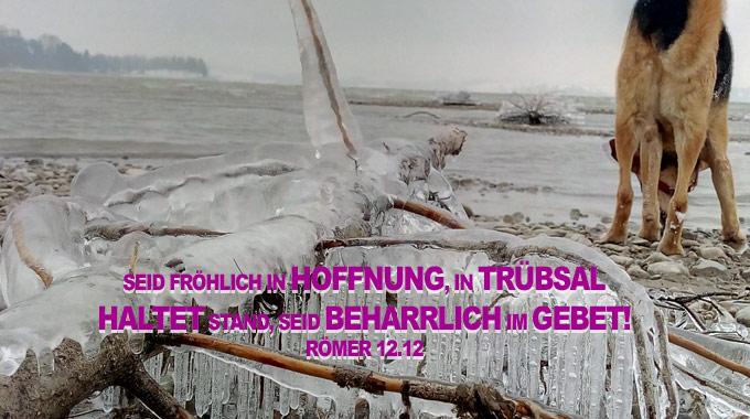 eisbaum- Gebet - Christine Danzer - go 4 jesus - Bibel