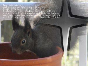 Eichhörnchen - Römer 8, 22-23 - Foto: Christine Danzer - go 4 Jesus - Bibel