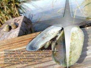 Süßwassermuschel - Mt. 13,45-46 - Foto: Christine Danzer - go 4 Jesus -Bibel