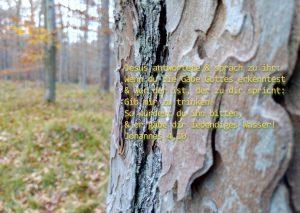 Rinde - Bibelzitat - Johannes 4,10 -Foto: Christine Danzer - go 4 Jesus