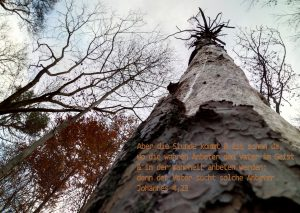 Baum - Bibelzitat: Johannes 4,23 - Foto: Christine Danzer - go 4 JEsus - Bibel Joh_4_23_anbeter