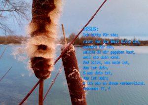 Rohrkolben -Bibelzitat - Johannes 17,9 - Foto: Christine Danzer - go 4 Jesus - bibel
