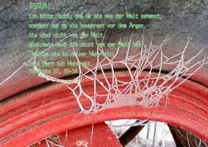 Reifen - Bibelzitat : Johannes 9 15-16 - Foto: Christine Danzer - go 4 Jesus - Bibelbitten03