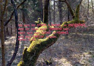 Baum mit Markus 11 25, Foto: Christine Danzer, go 4 Jesus, Bibel, Bibelzitate