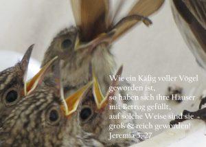Grauschnäpper mit aufgesperrten Schnäbeln, Jeremia 5,27, Foto: Christine Danzer, go 4 Jesus, Bibel
