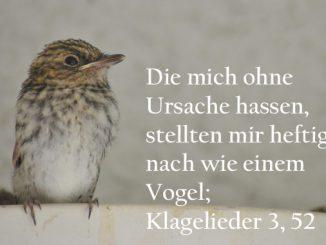 Grauschnäpper - Klagelieder 3,53 , Foto: Christine Danzer, go 4 Jesus, Bibel _kla_3_52