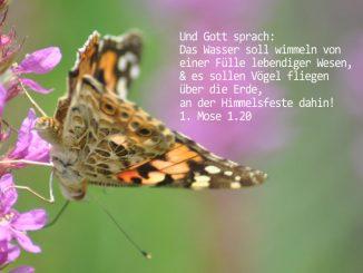 beitrag kleiner Fuchs, Foto: Christine Danzer, go 4 Jesus, Bibel, Jesus