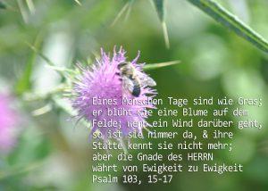 Distel mit Biene, Psalm 103, Foto: Christine Danzer, go 4 Jesus, Bibel, Jesus