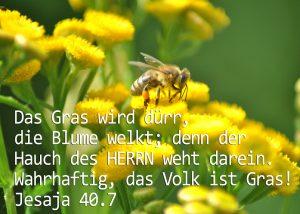 Kamille, Biene, Jesaja 40,7 Foto: Christine Danzer, go 4 Jesus, Bibel, Jesus