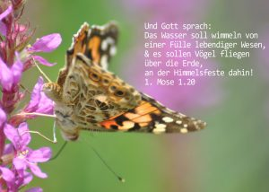 Kleiner Fuchs , 1. Mose 1, 20, Foto: Danzer, Christine, go 4 Jesus, Bibel, Jesus